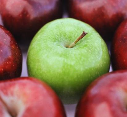 Minnesota Apples