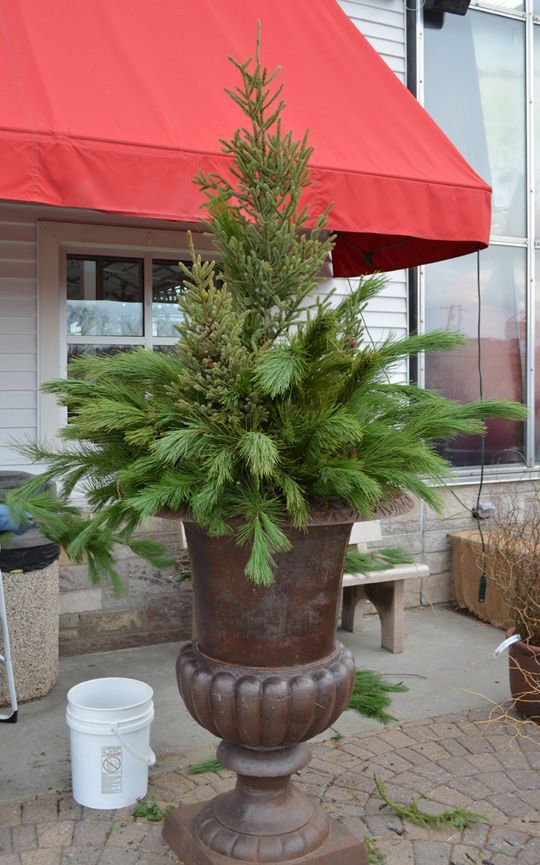 How To Winter How To Create A Spruce Tip Pot Photo
