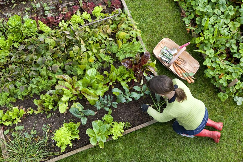 veggie garden - Vegetable Garden Ideas For Minnesota