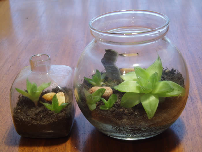 Terrariums can very in size, shape and container, however all must be in a  closed or enclosed container. Build your own terrarium kits are available  with ... - How To - Growing Annuals And Perennials - How To Create And