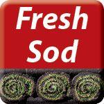 fresh sod