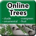 Online Trees