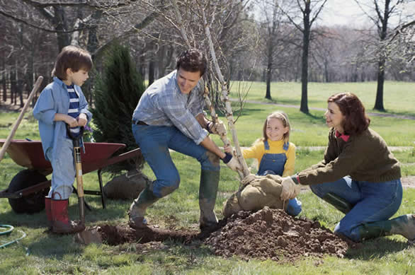 How To - Growing Shrubs and Vines - Planting Trees and